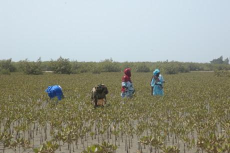 La Préservation de la biodiversité: La RSE dans le delta du SALOUM